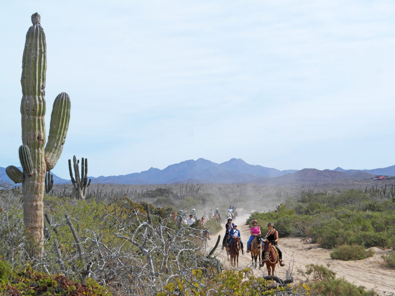 Pacific Horseback Riding Tour   Horseback riding on the beach, ocean cliffs, desert and canyon trails.