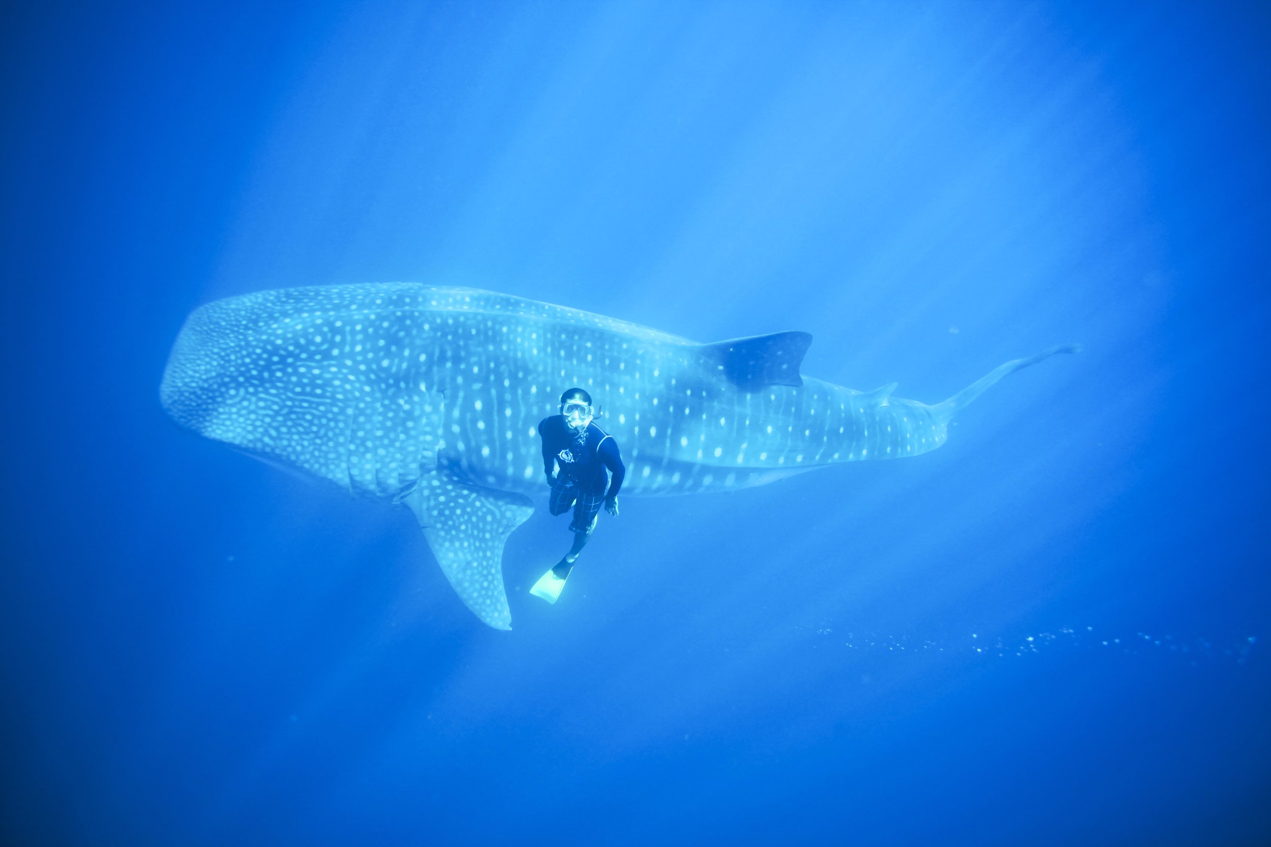 Swim with the Whale Sharks   Incredible experience that should be on everyone's bucket list - seasonal- October - April