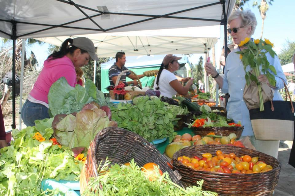 San Jose City and Organic Market tour   City tour of San Jose and Organic market