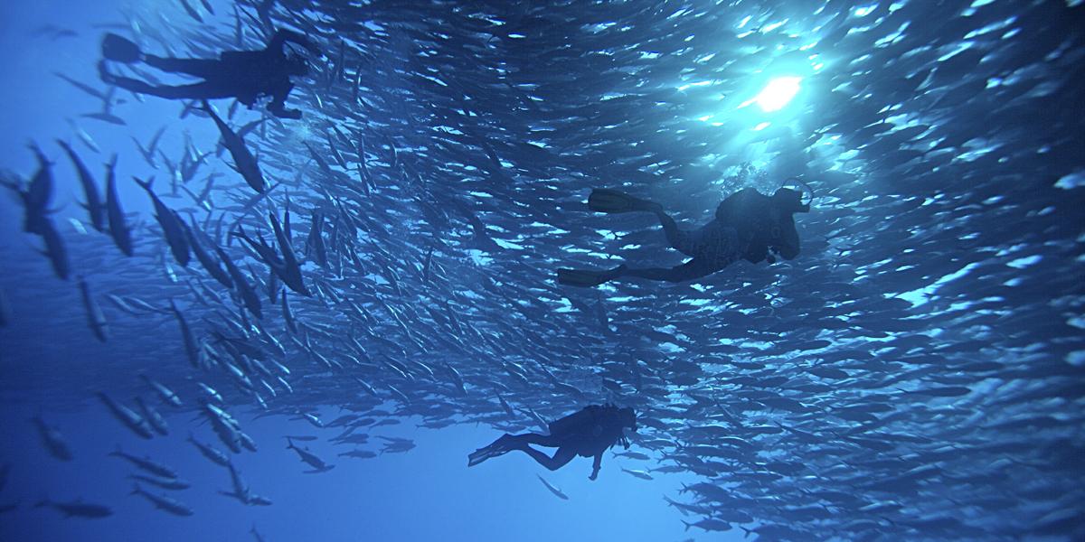 scuba-diving-cabo-pulmo.jpg