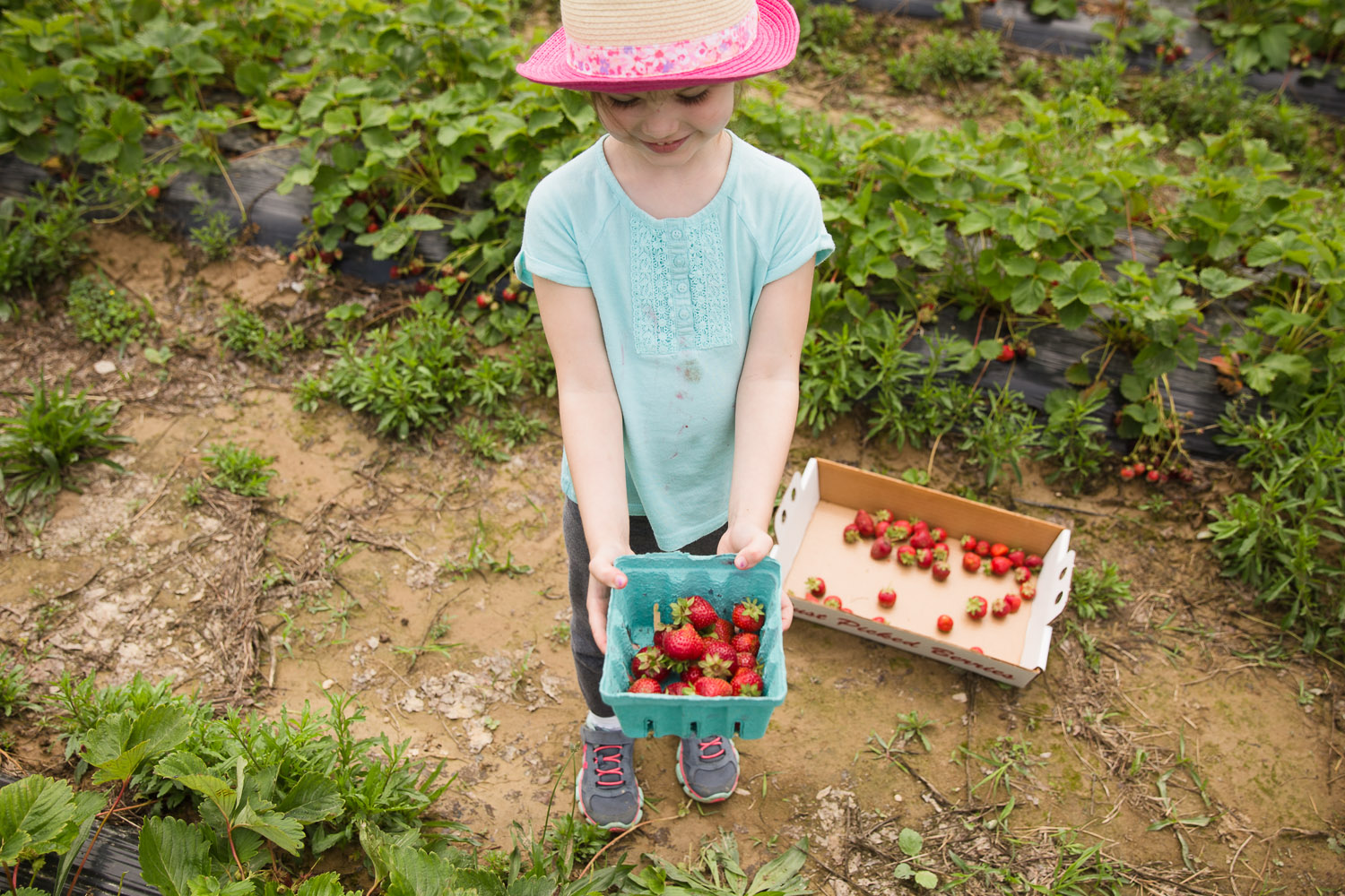 Strawberries-2015-17-ss.jpg