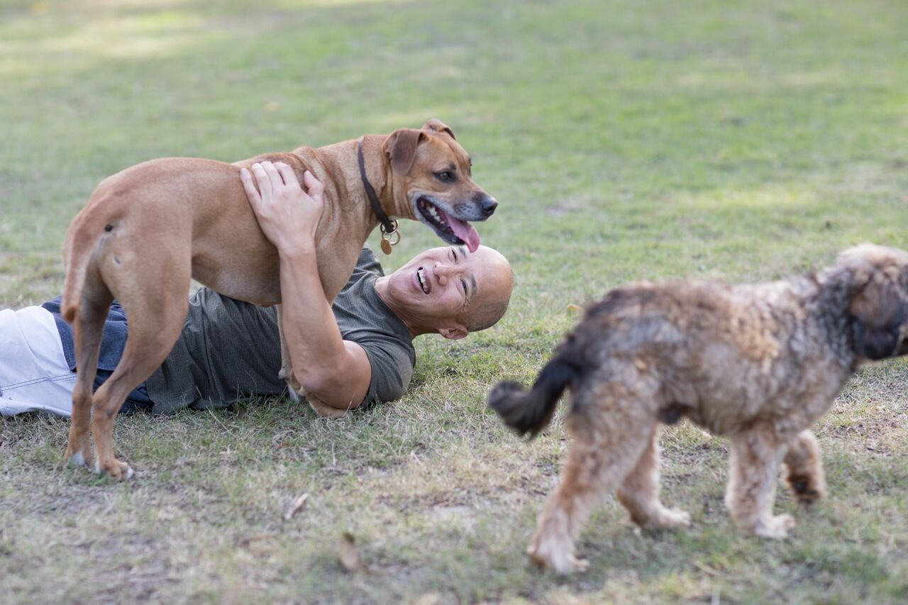 Charlie and his four legged friends. Image supplied.