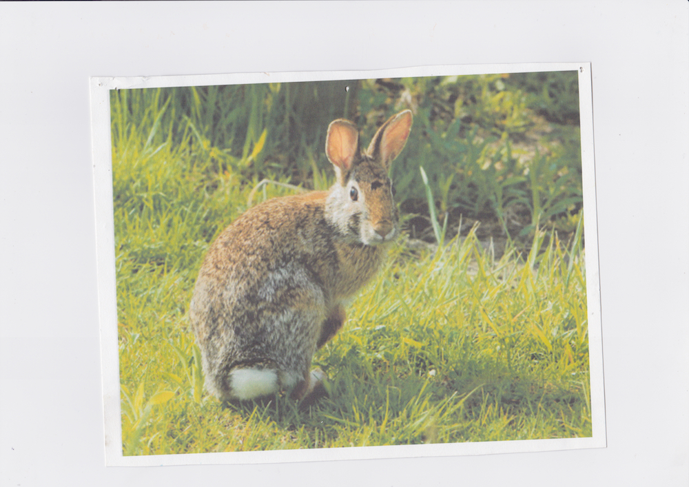 Rabbit   Printed 2015 Scanned October 2018