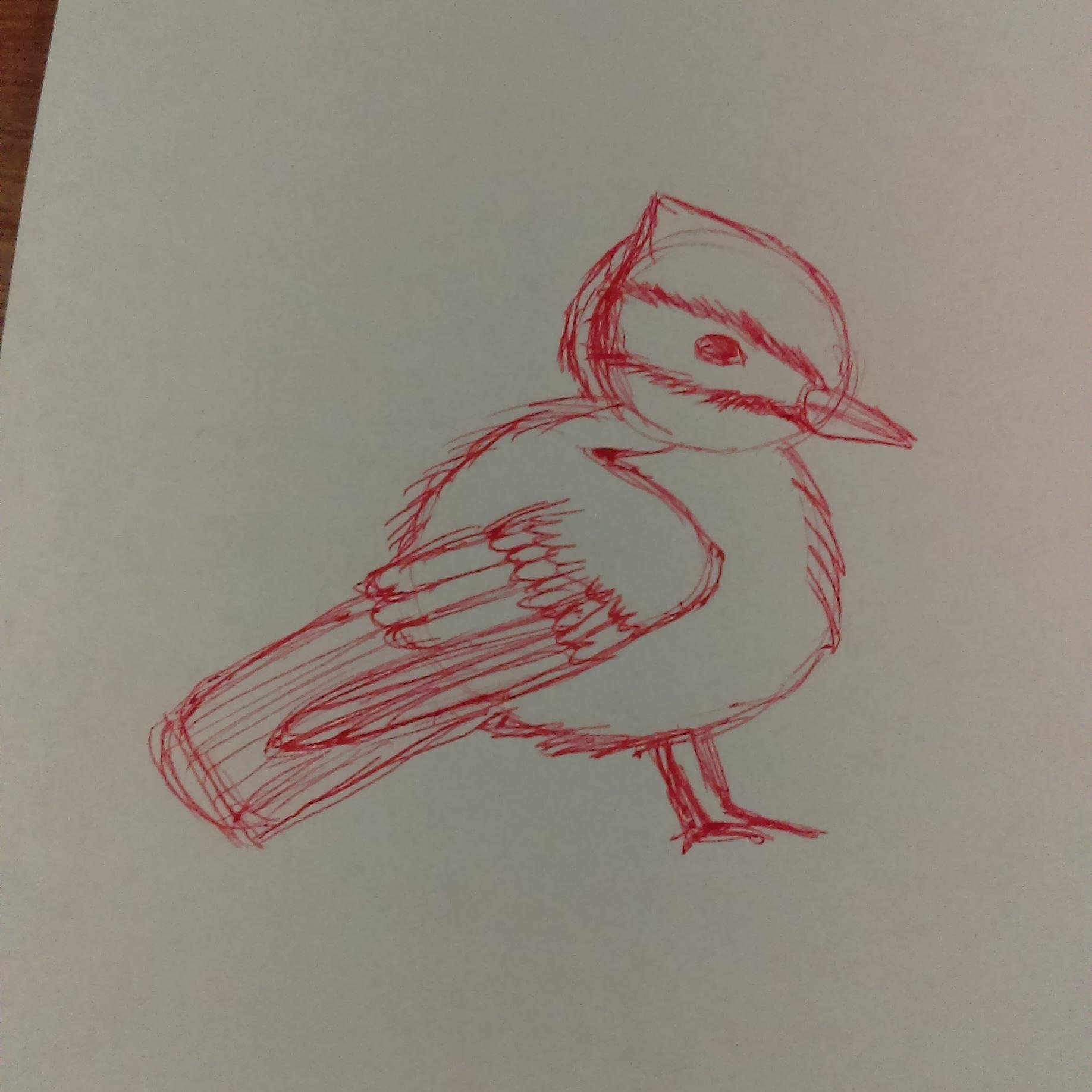 Birdie daily sketch cute animals illustration bird