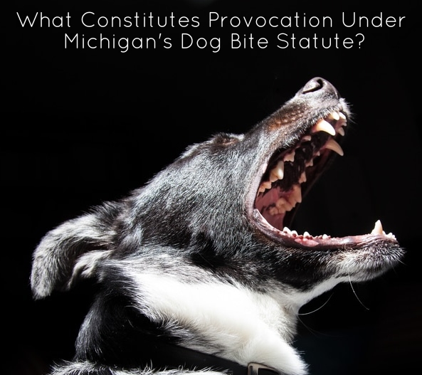 Metro Detroit Dog Bite Lawyer