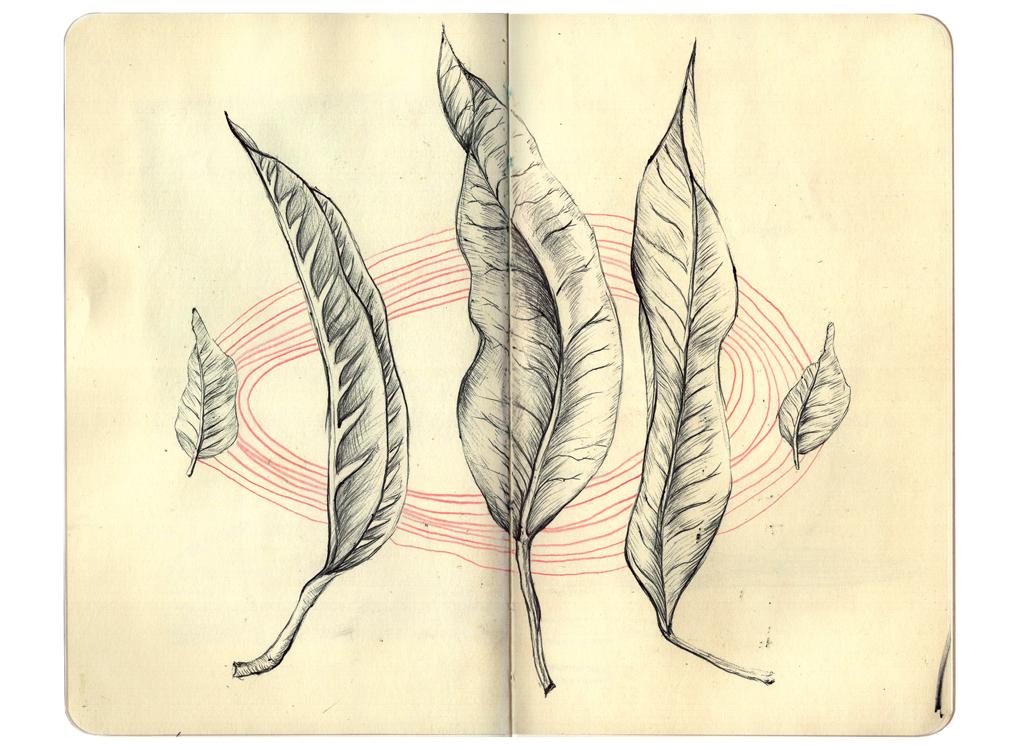 CostaRicaSketchbook5.jpg