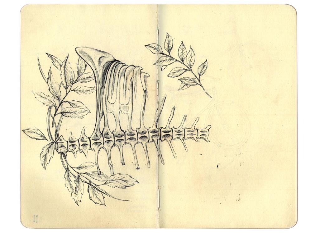 CostaRicaSketchbook7.jpg