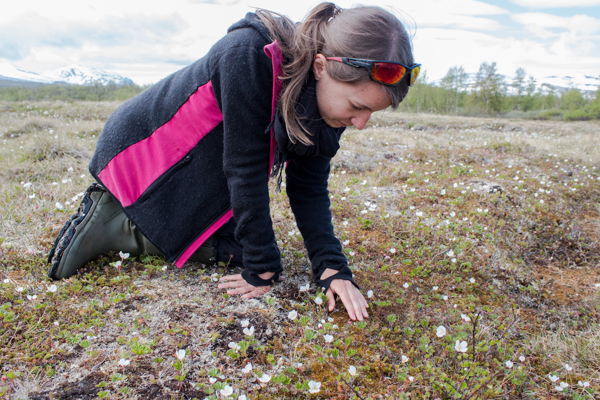 Gesche Blume-Werry studies the interaction of plants and permafrost.