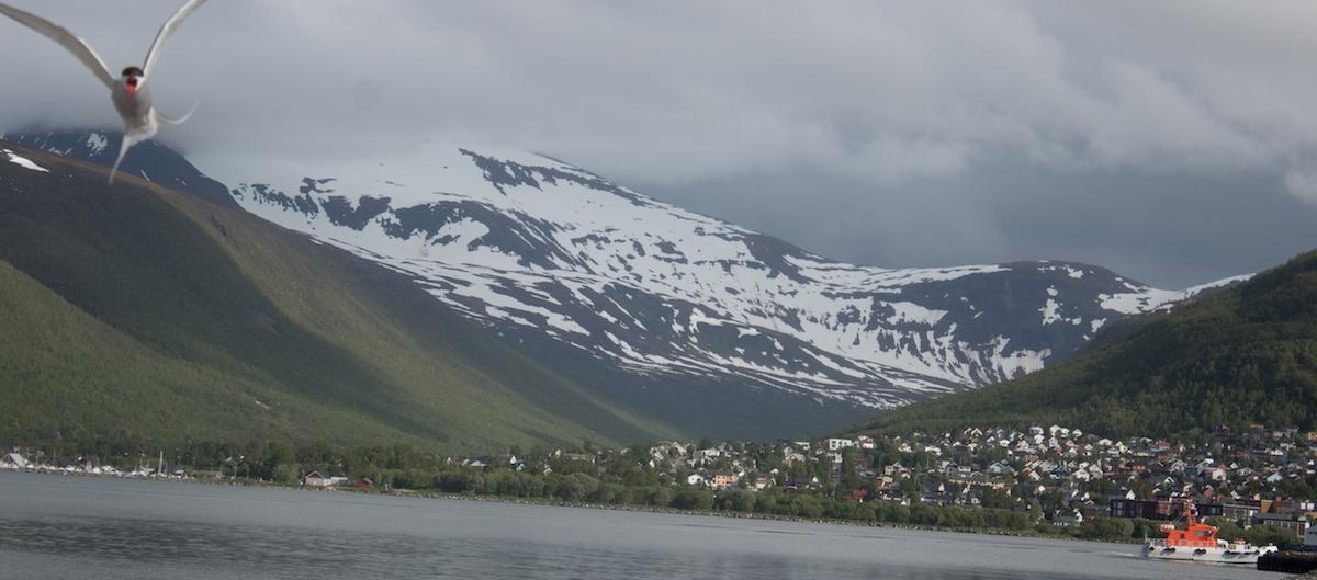 Tromso-Norway_AMY-MARTIN.jpg