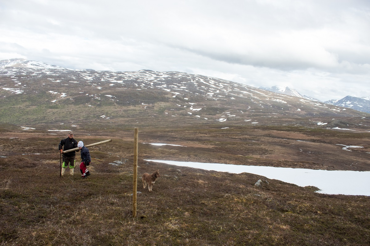 The mountaintop where the Aleksandersens herd their reindeer