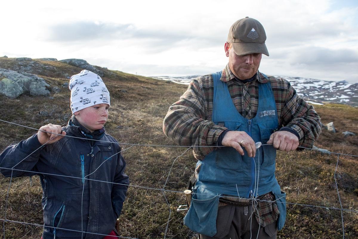 Ulf Isak Aleksandersen helps his father fix a fence.