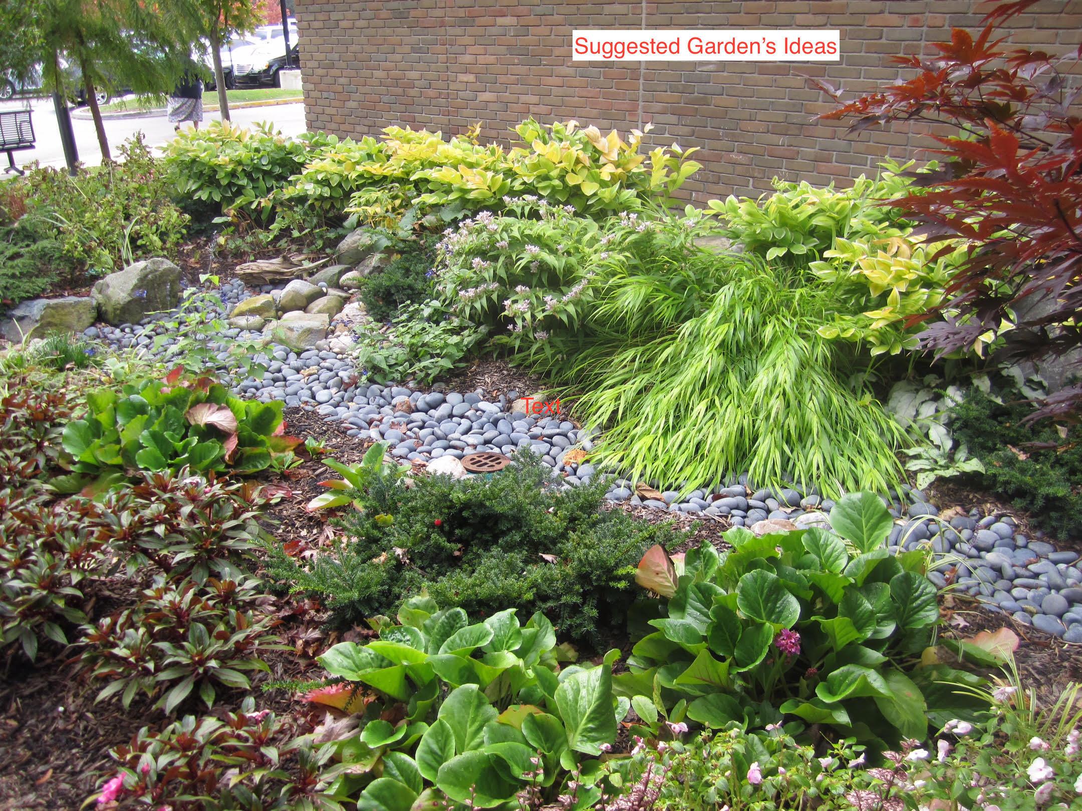 Halsey Street - Suggested garden ideas_1.jpg