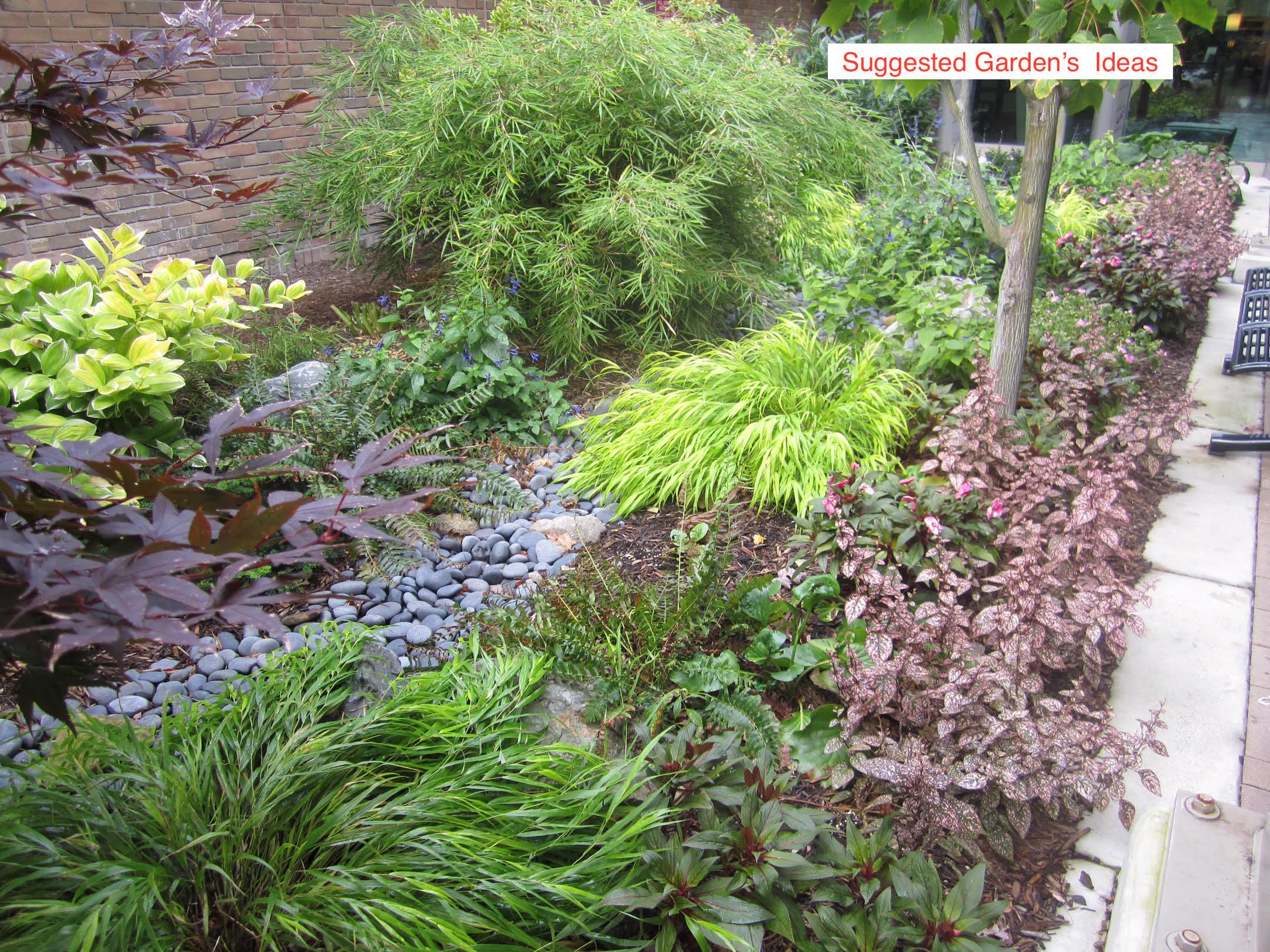 Halsey Street - Suggested garden ideas_2.jpg