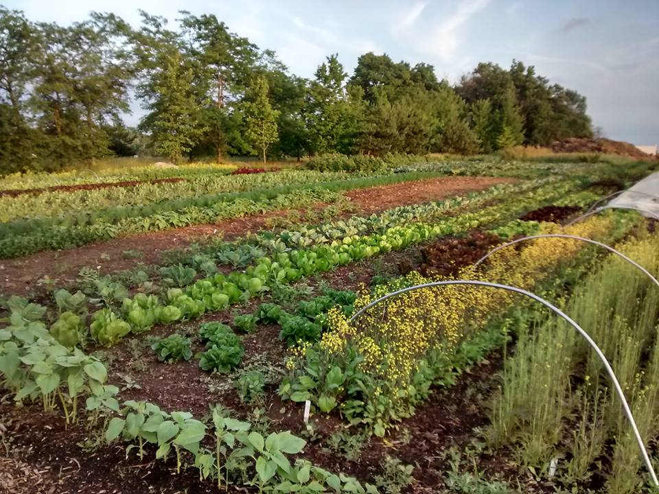 Amy's Acre full of delicious growing vegetables. Photo from Amy's Acre Facebook page.