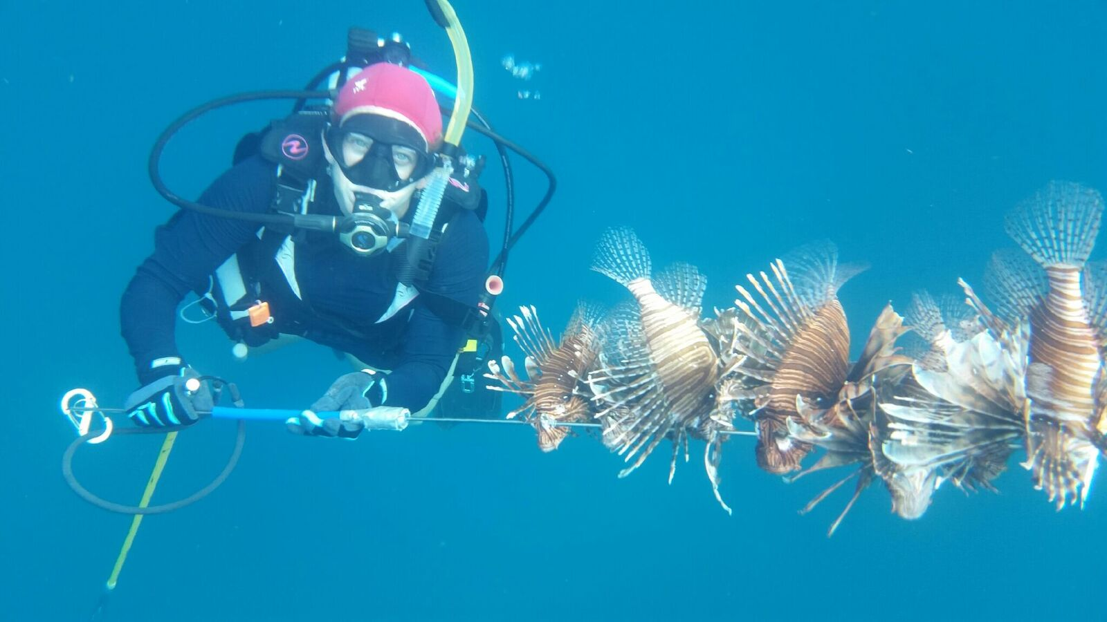 Rachel with her spear full of lionfish, the invasive species she hunts.