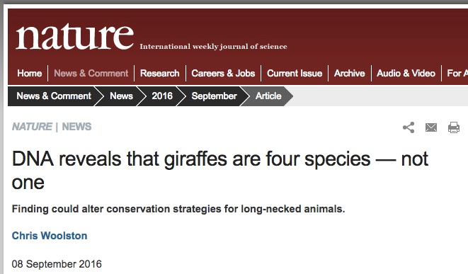 Nature News asked for Aaron's opinion on giraffe genomics!