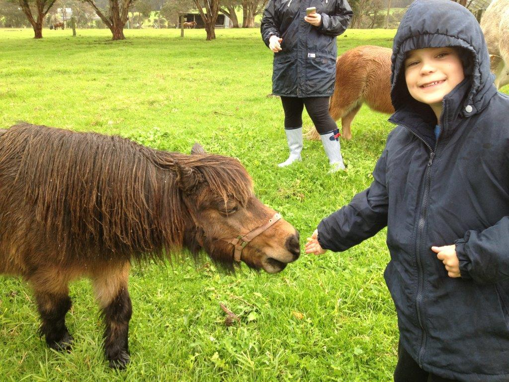misty valley country cottages boy and horse