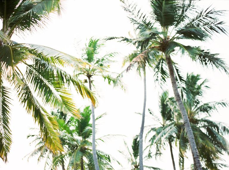 Maldives Palmtrees