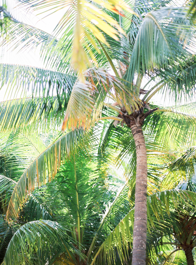 Maldives Desert Island Palmtrees
