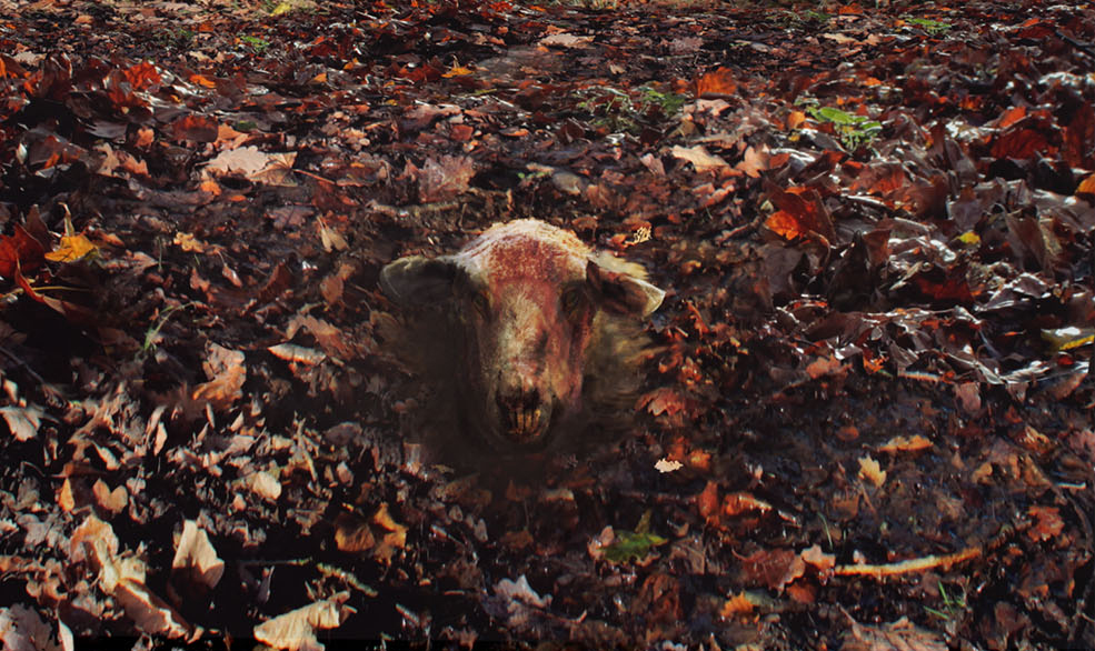 Sheep head in ground.jpg