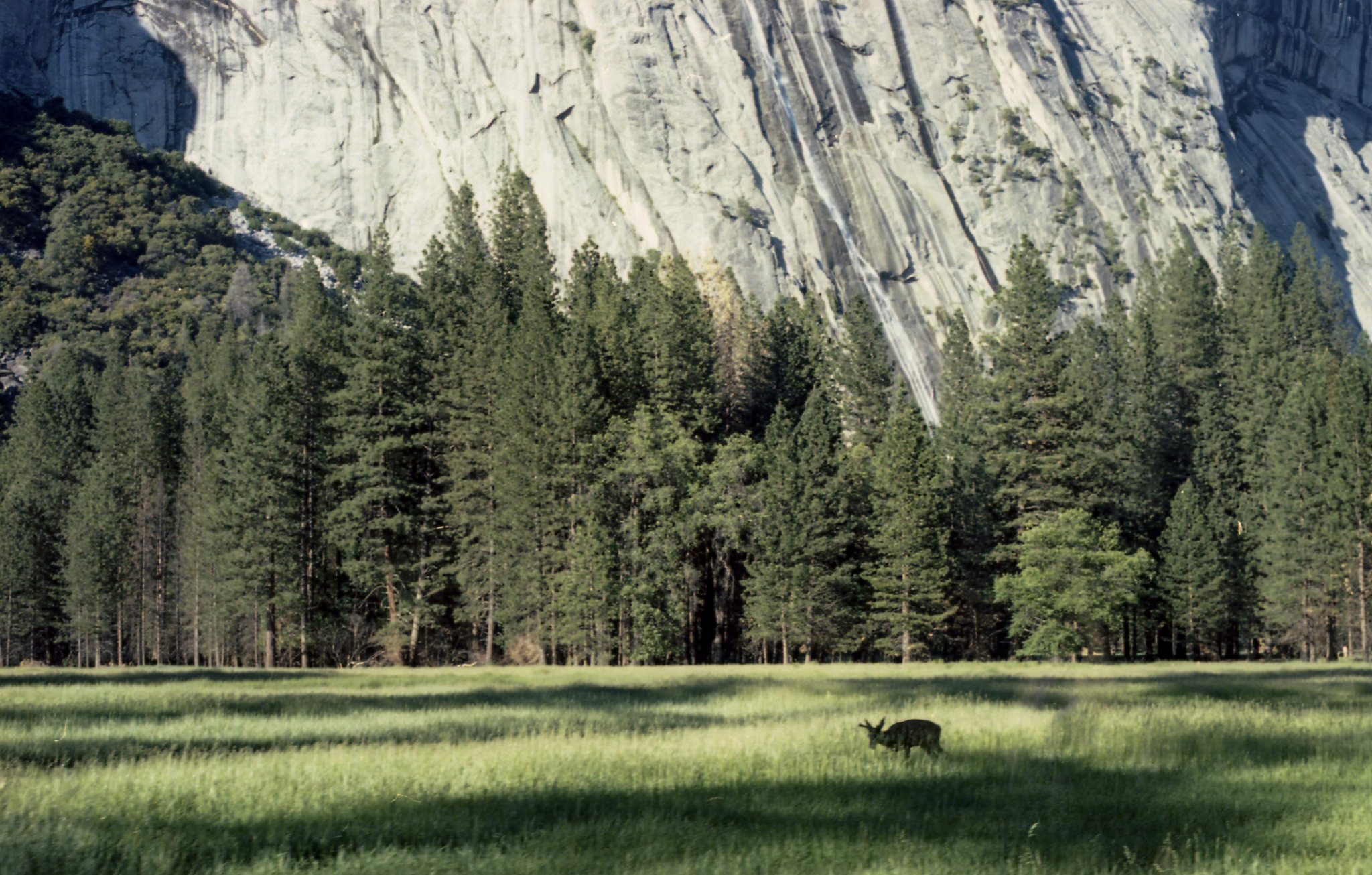 yosemite-national-park-valley-cassie-cook-photography