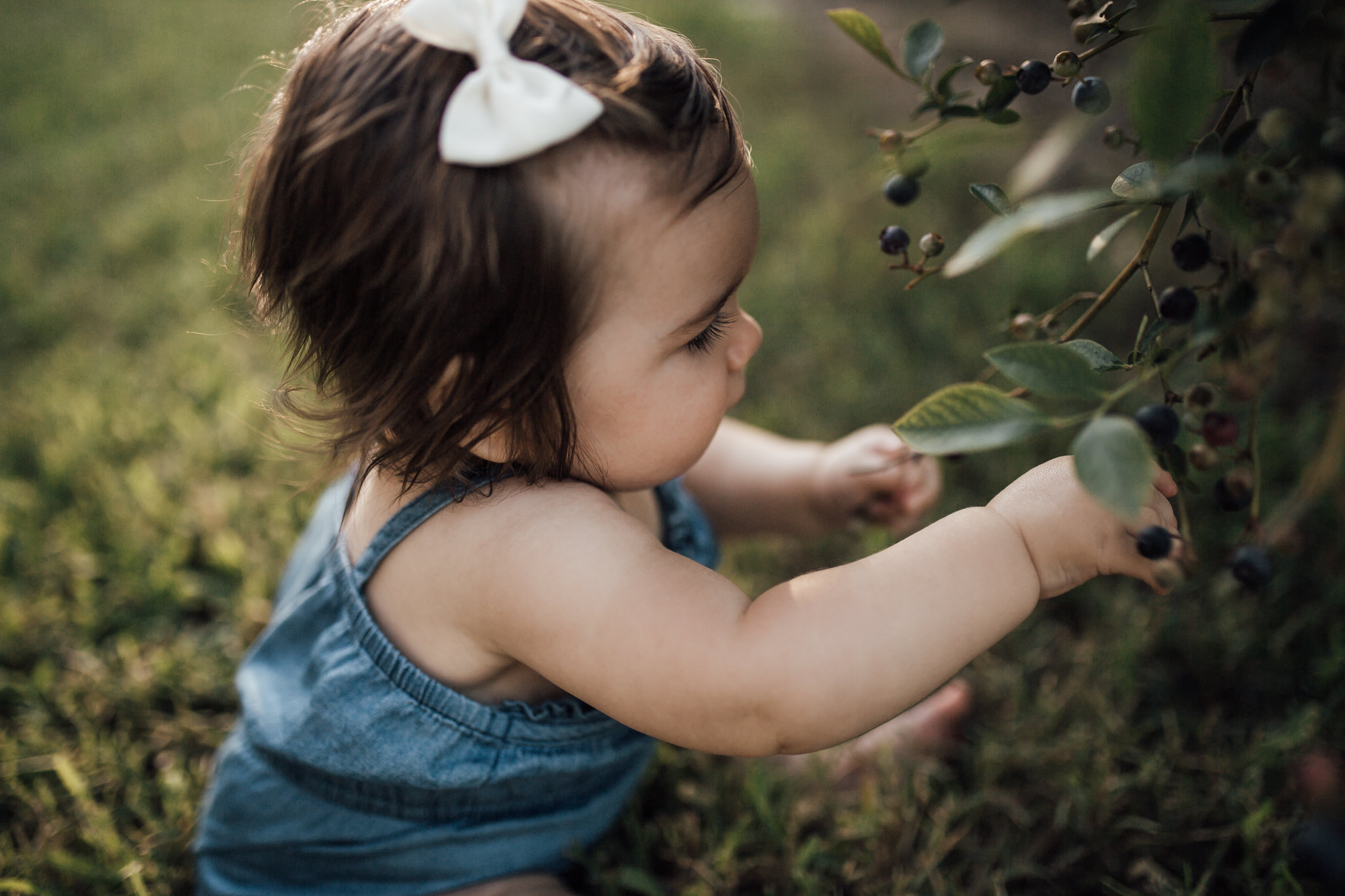 cassie-cook-photography-family-lifestyle-nesbit-blueberries
