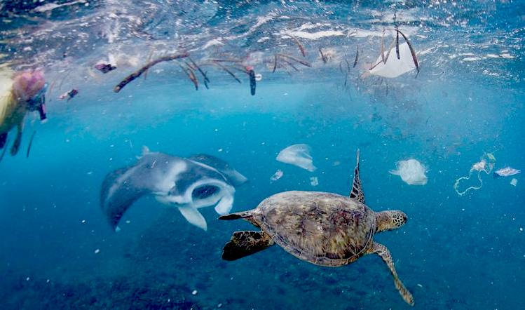 plastic-turtle-manta-ray-ocean-trash-challenge-one-breath-photo.jpg