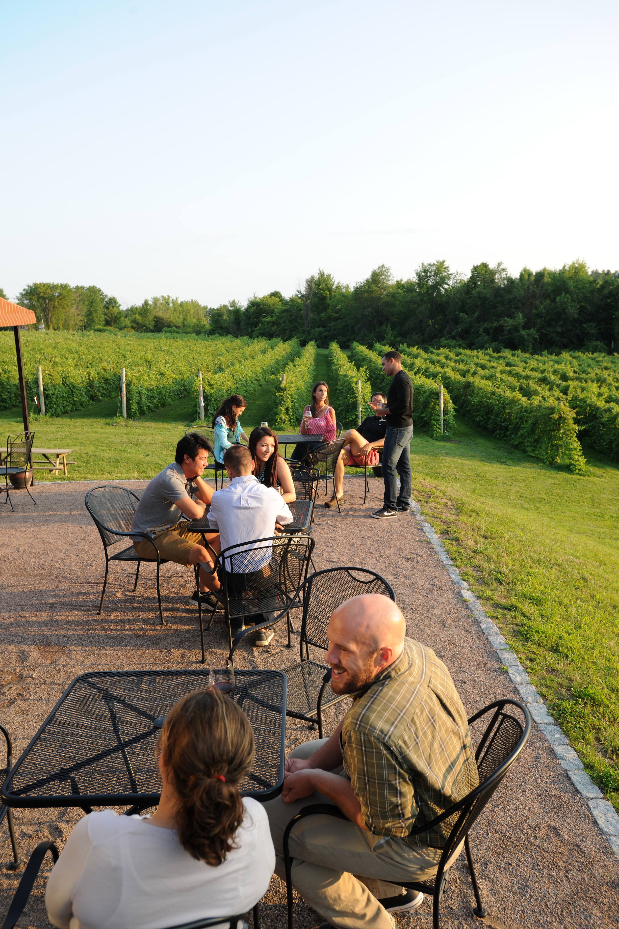 groups of people on the patio and view of the vineyard