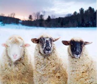 John-Churchman-lamb-sidebar.png