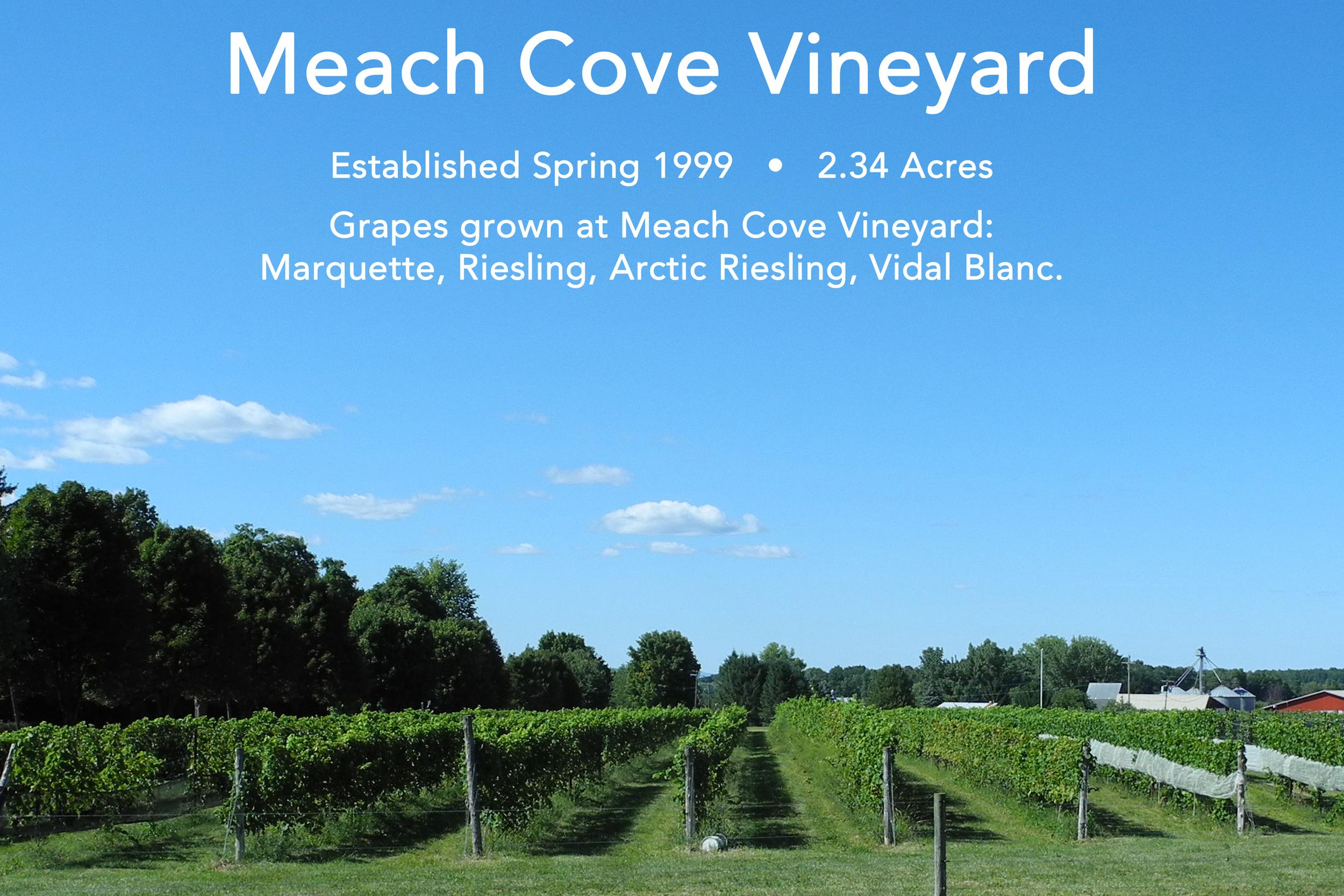 Meach Cove Vineyard