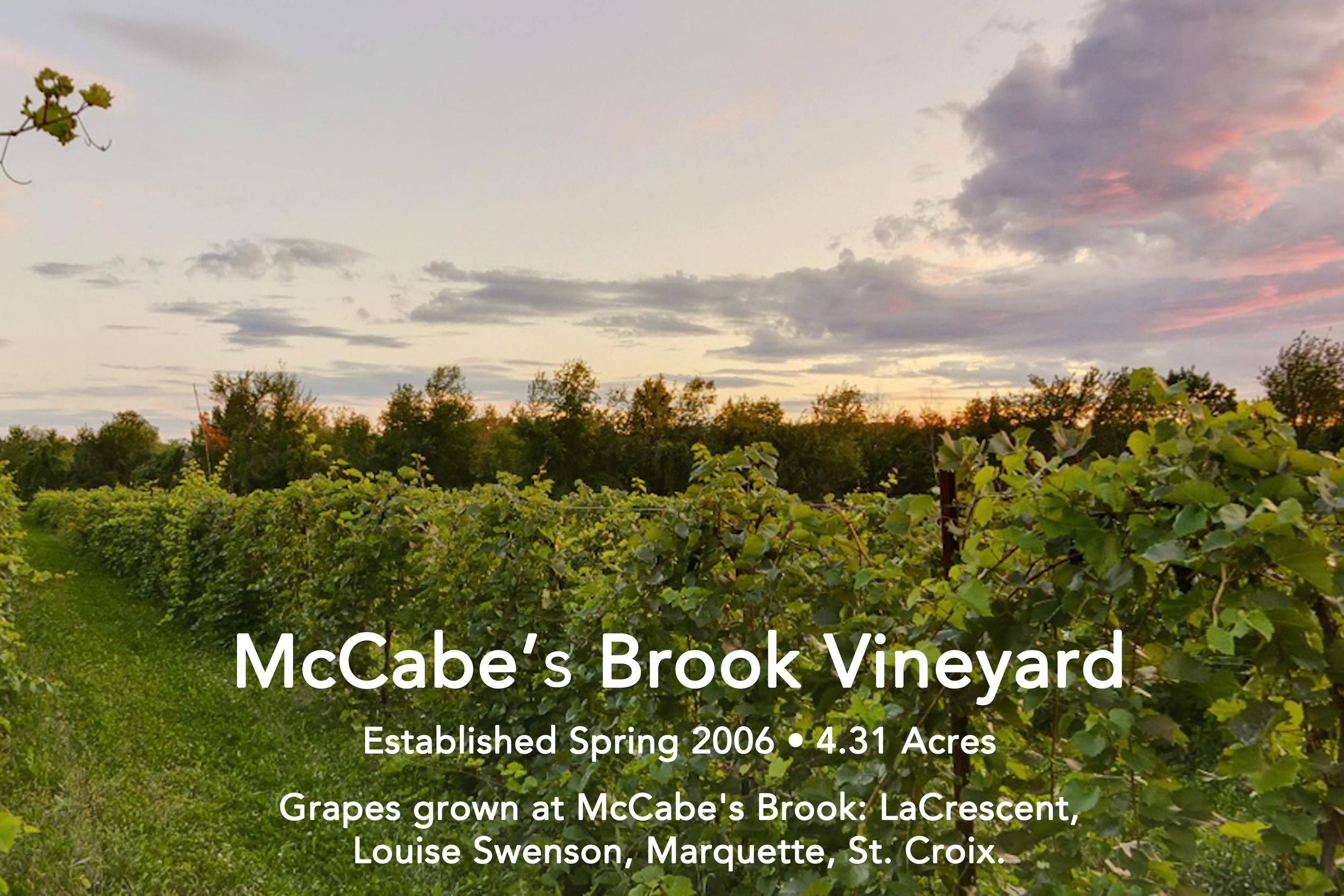 McCabe's Brook Vineyard