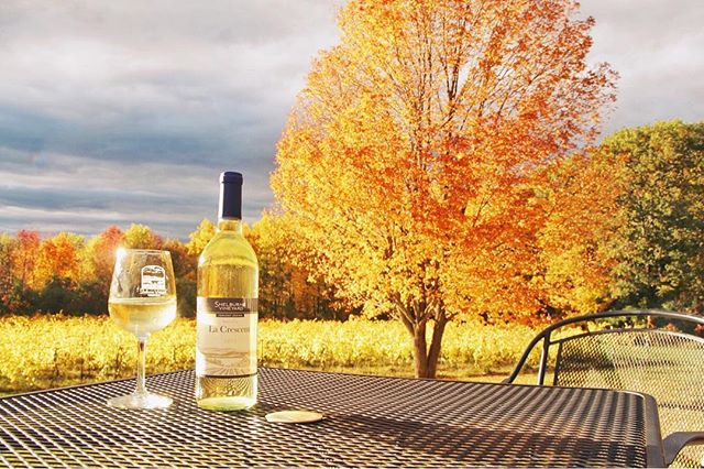 With fall already coming to a close, we wanted to memorialize the colors of our big tree with a glass of La Crescent. Such a fleeting, beautiful season. . . . . . . . . . #shelburnevineyard #vineyardphotography #iindefenseofhybrids #madeinvt #vermontfall #vermontlife #winewednesday