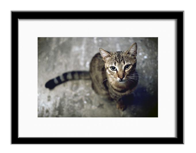 Cat, Greece 01