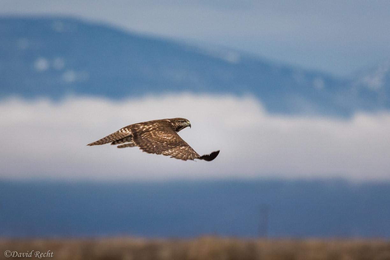 Hawk!.jpg
