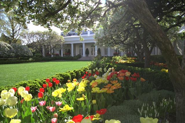 White House Garden Mixed Flowers.jpeg