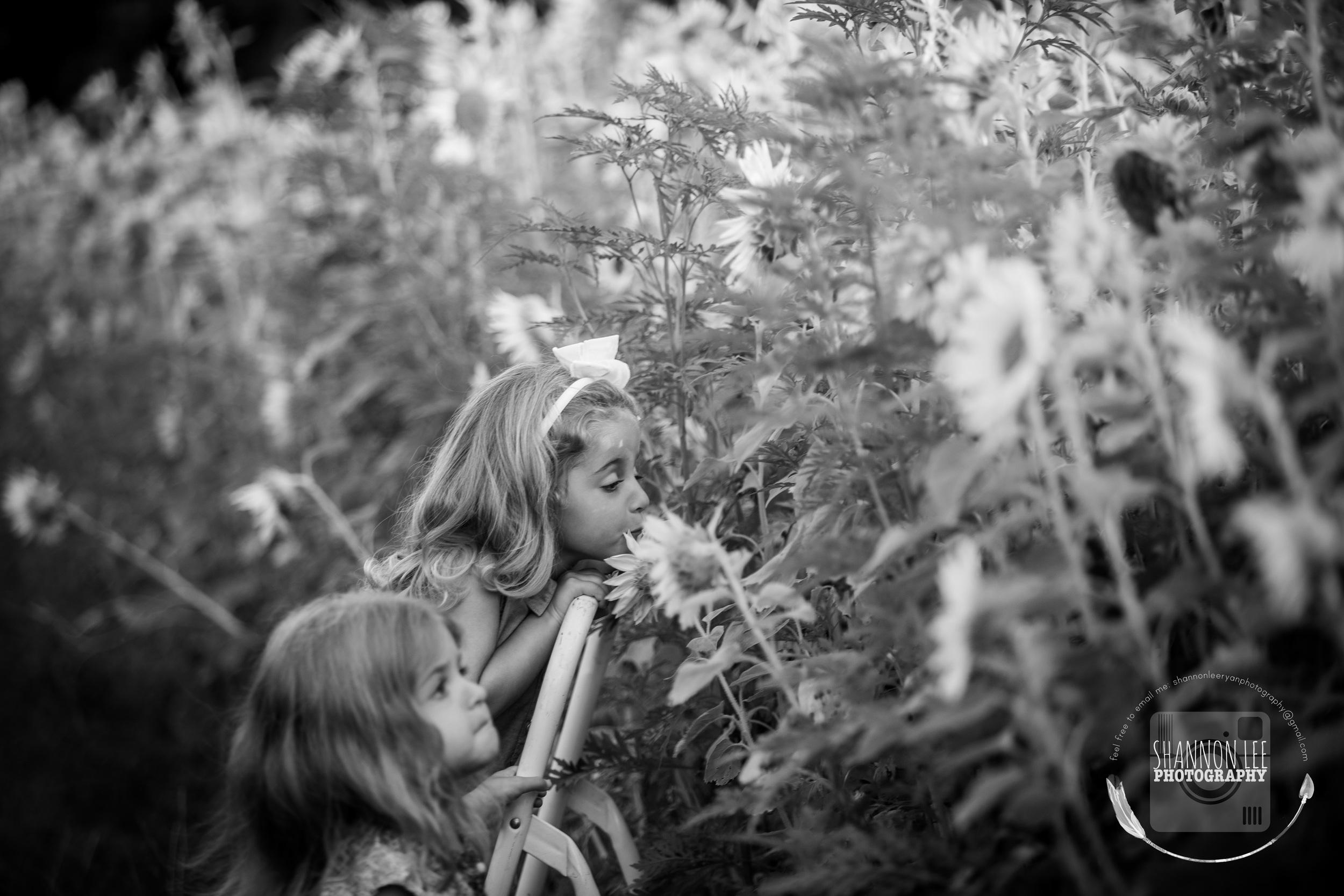 Long Island Sunflower Session Shannon Lee Photography (3).jpg