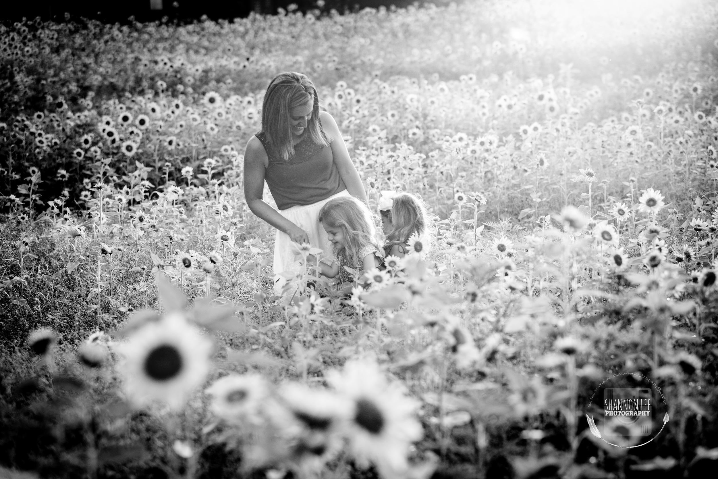 Long Island Sunflower Session Shannon Lee Photography (8).jpg