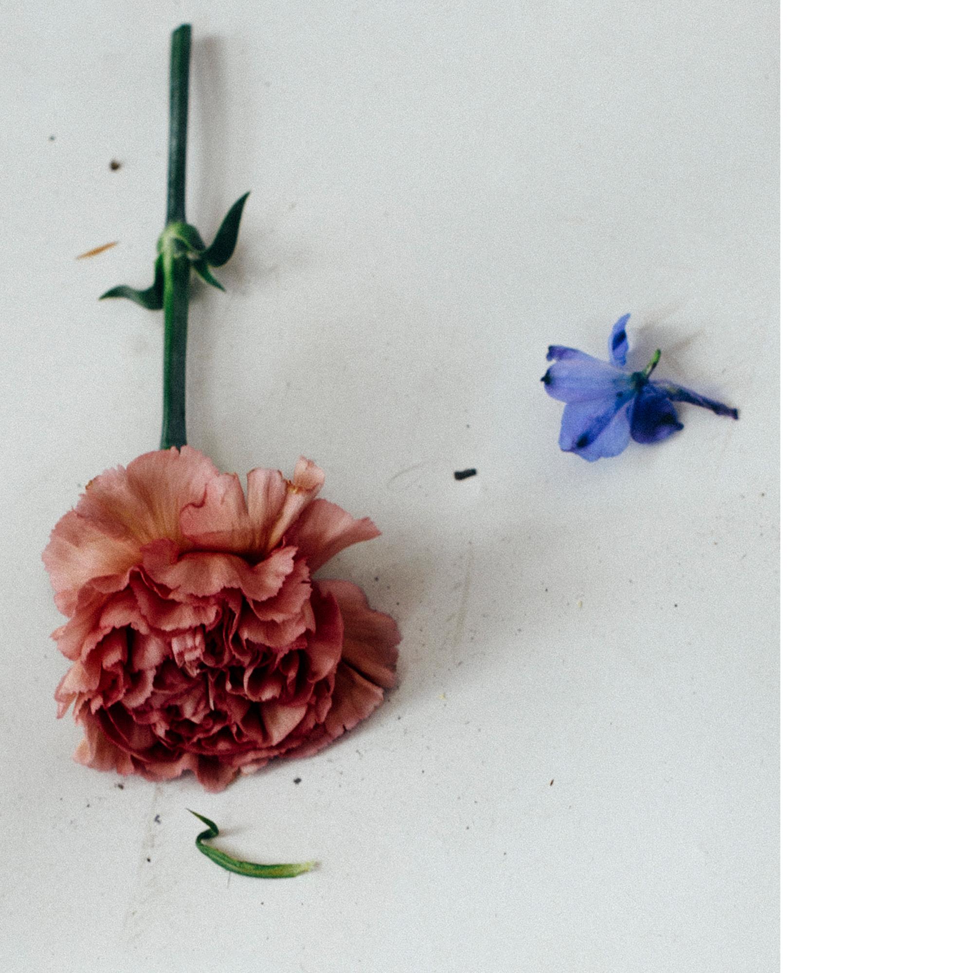 flora-01-Atmosphere.jpg