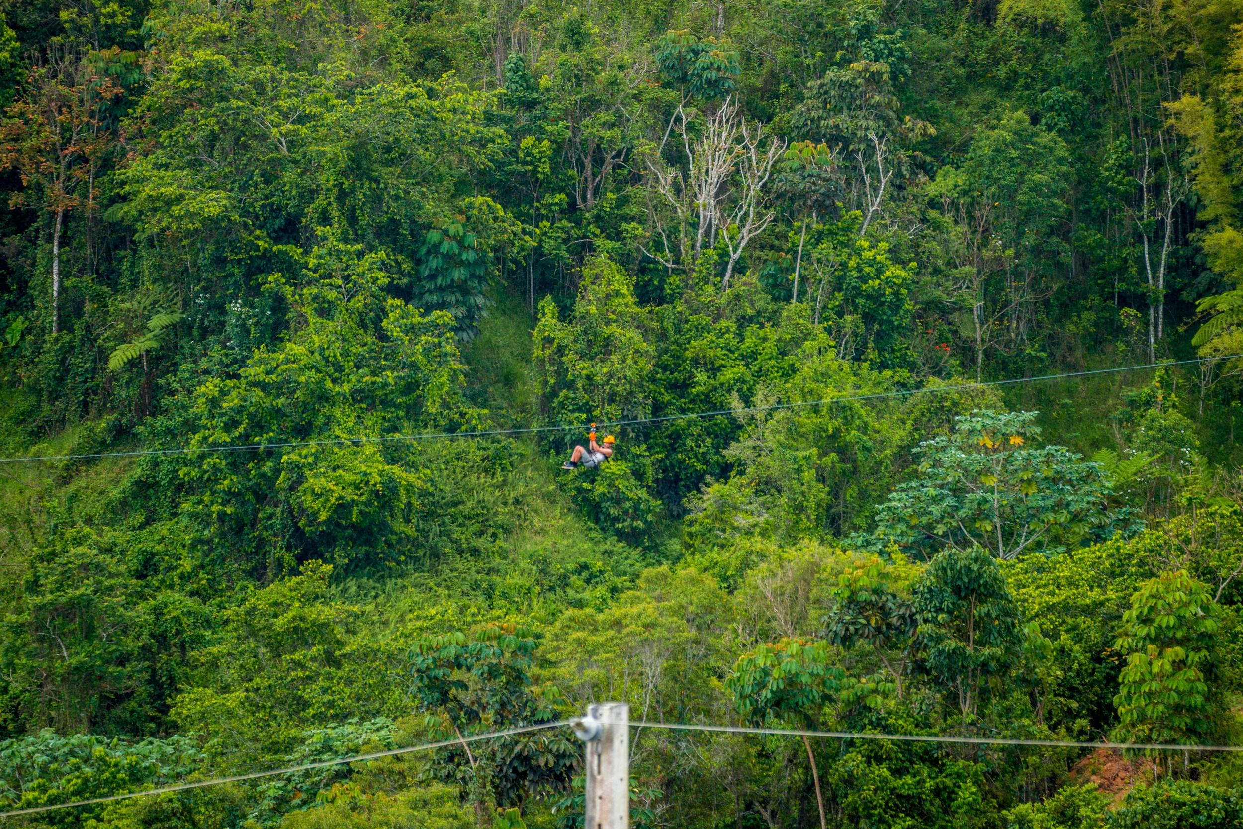 Tordo Verde-17.jpg