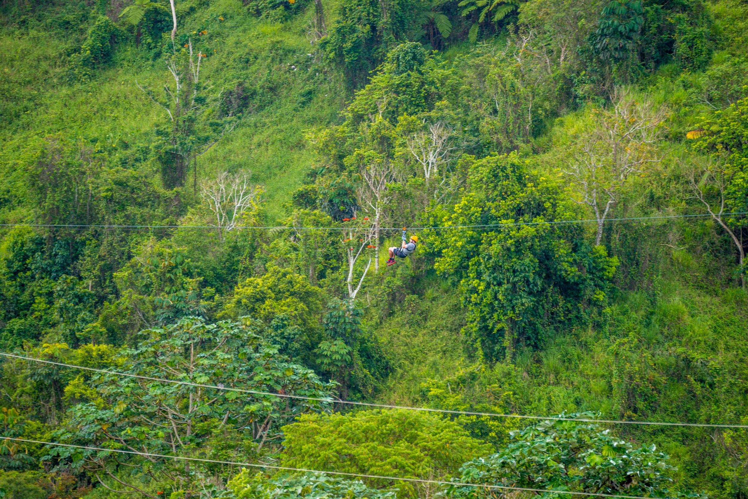 Tordo Verde-27.jpg