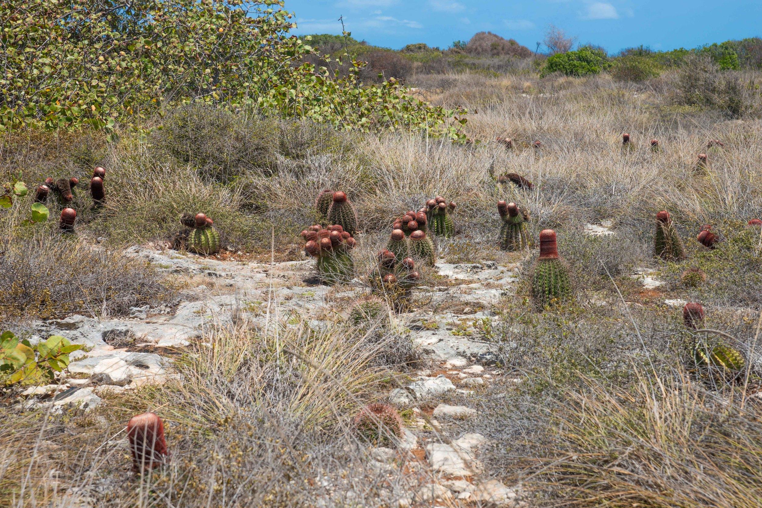 Cabo Rojo -8.jpg