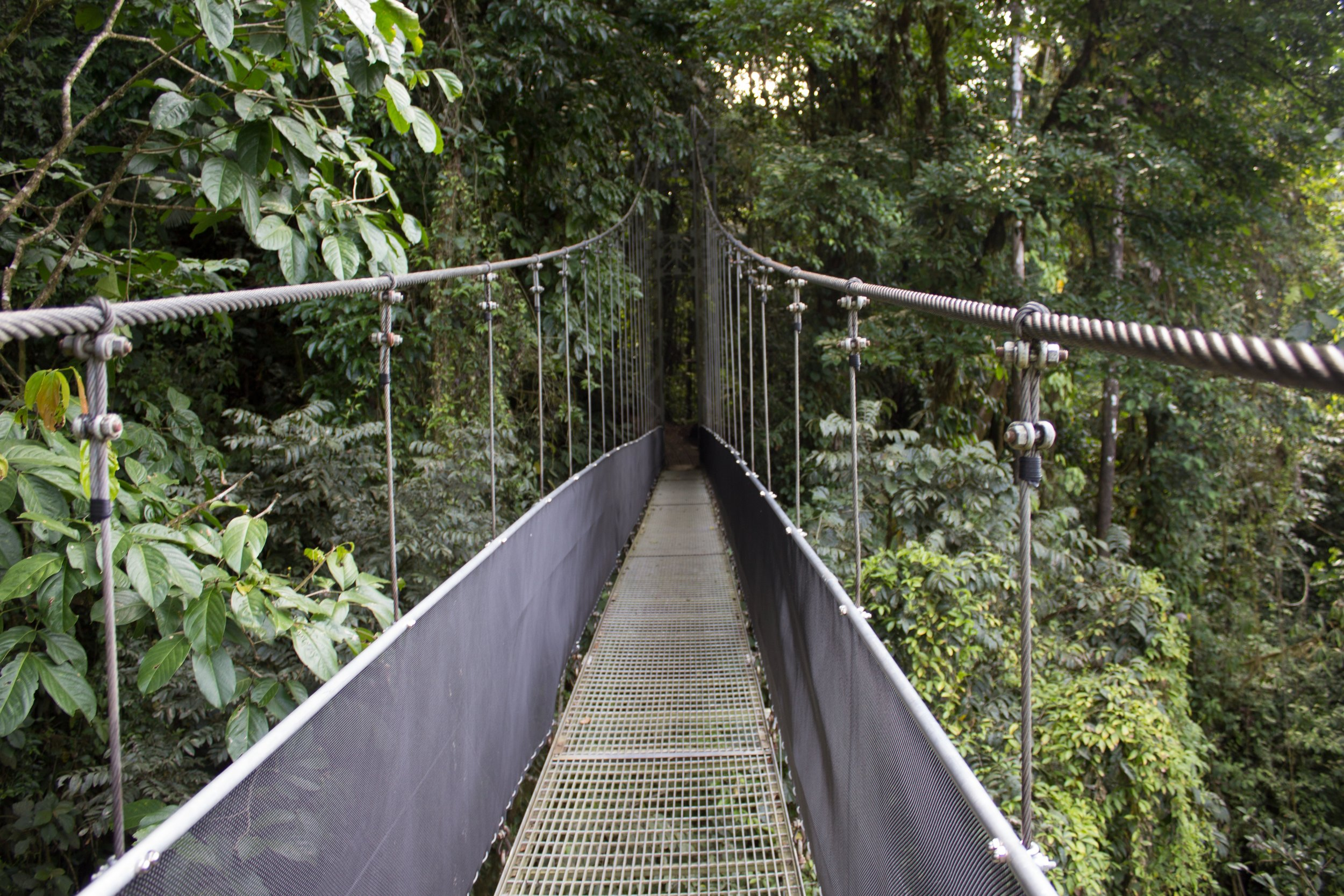 Costa Rica (Rainforest).jpg