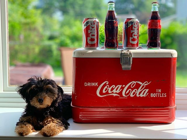 One summer can change everything. Happy 4th! . .  #newcoke #newpup #strangerthings #4thofjuly