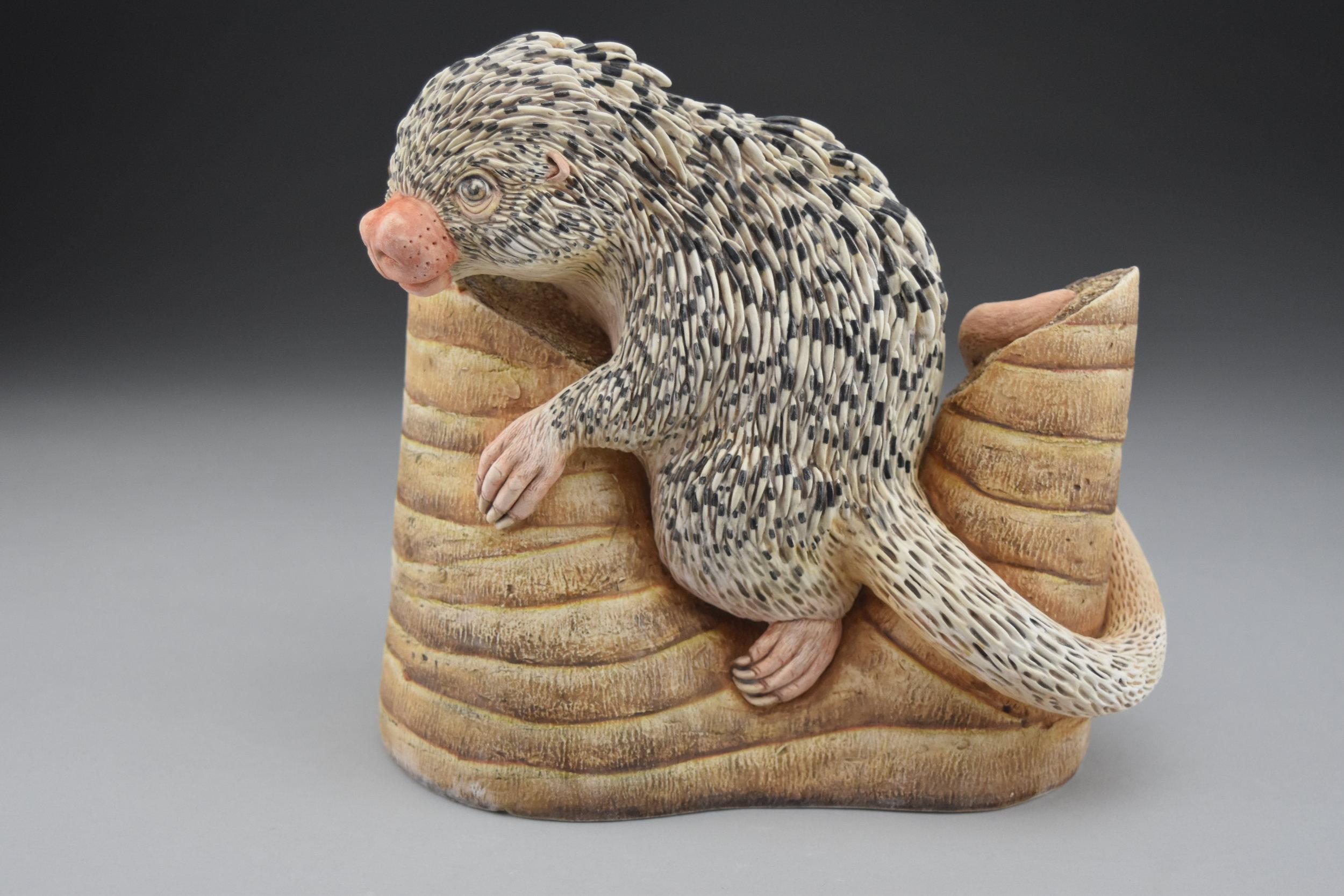 Prehensile tail porcupine