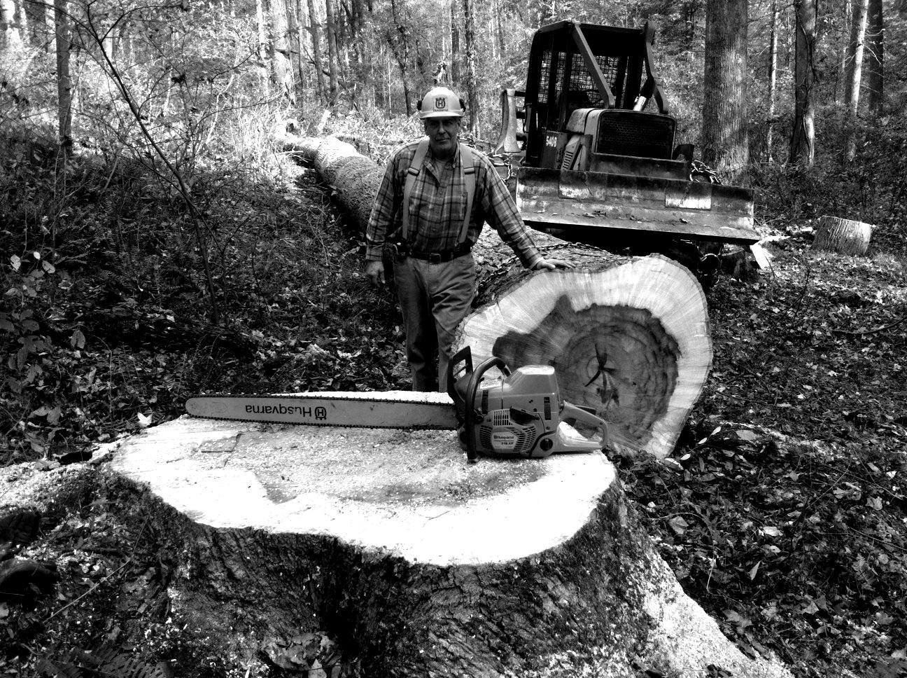 Forest Logging BW.jpg