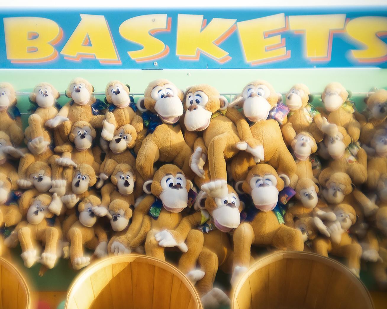 Win a Monkey
