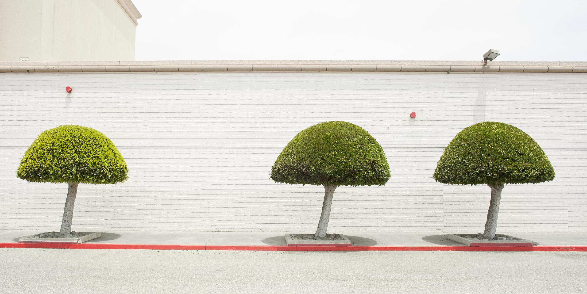 Sears Trees