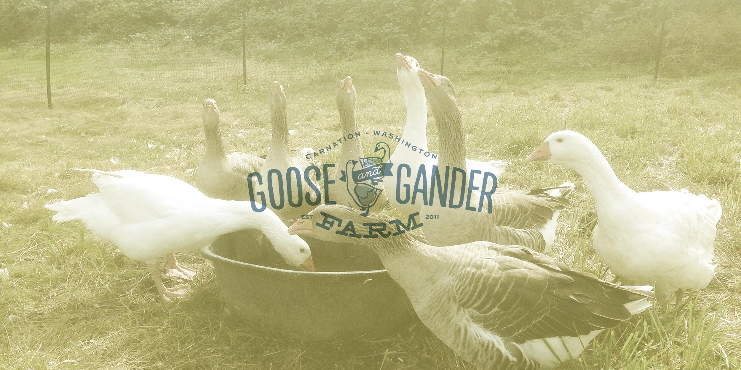 G+G_geese-web02.jpg