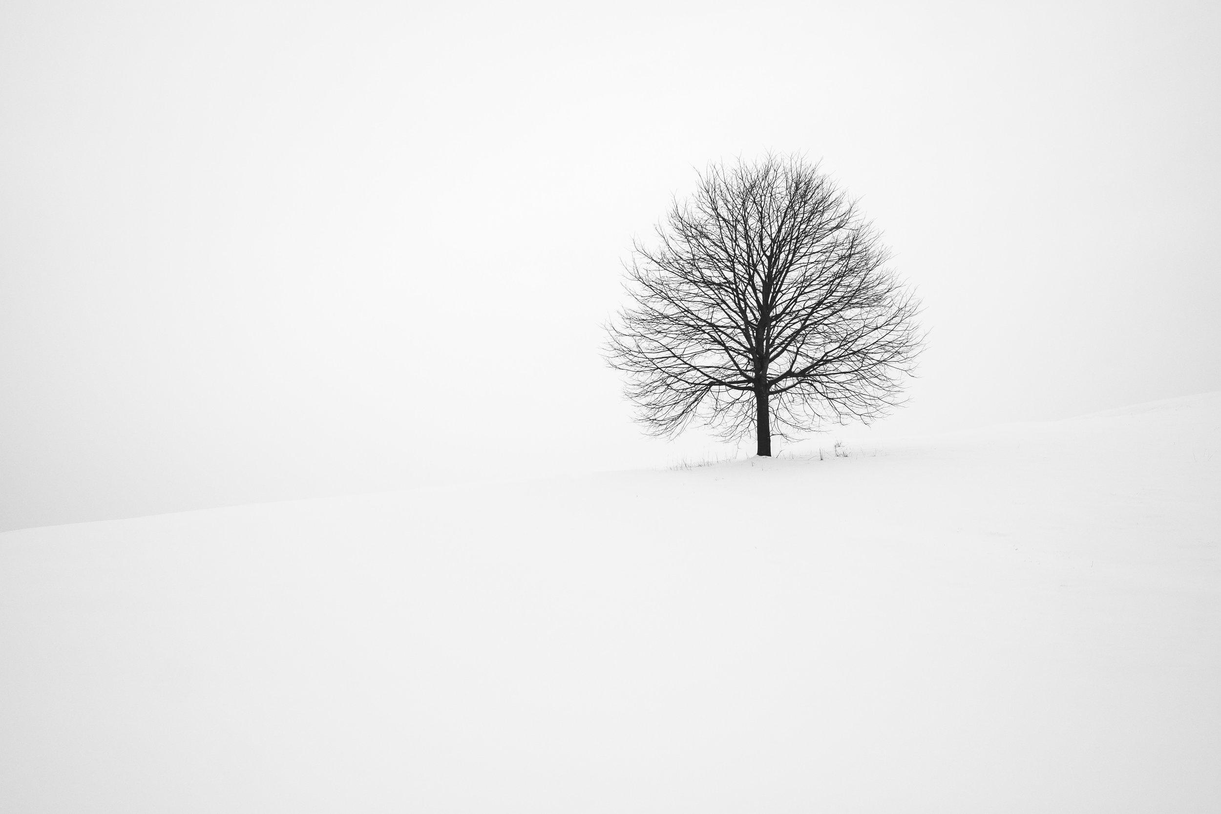 Photo by  Fabrice Villard  on  Unsplash