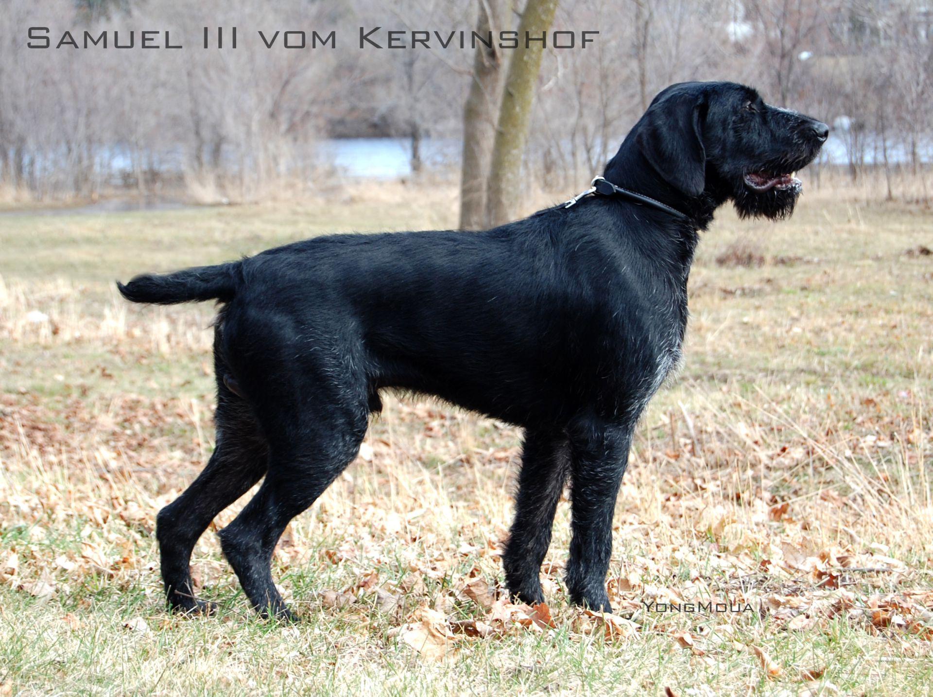 Samuel III vom Kervinshof_03172012_resized.jpg